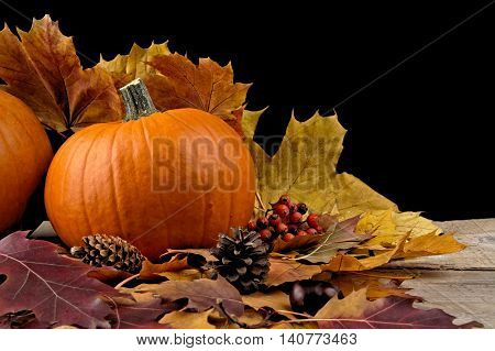 Pumpkin With Autumn Leaves For Thanksgiving Day On Black Backgro
