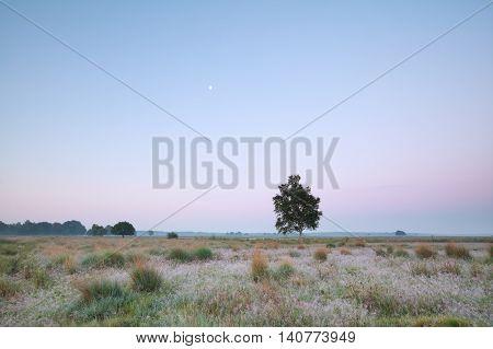 moon over summer meadow Dwingelderveld in Netherlands