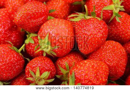 Strawberry, Close Up