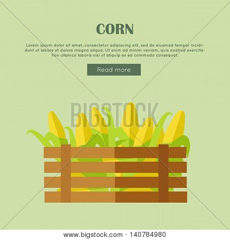 Corn vector web banner. Flat design. Illustration of wooden box full of fresh and ripe cereals on color background for grocery shop, farm, agricultural company web page design.