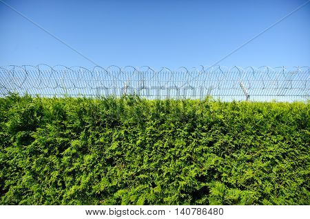cypress tree and fence with barbed wire, blue sky
