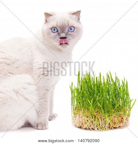 Cat Licking Its Lips After Eating Grass