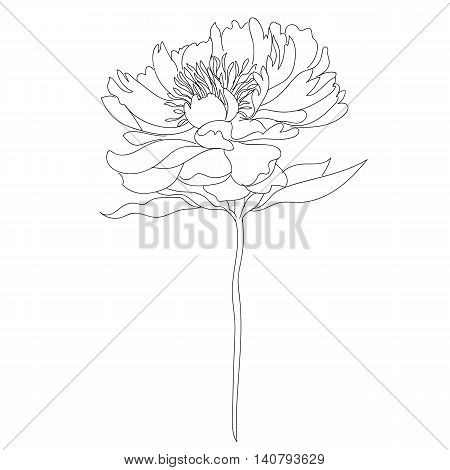 Graphical flower, blossom flower, decorative flower, monochrome flower, black flower, tatto flower, vector flower, silhouette flower, hand drawn flower.