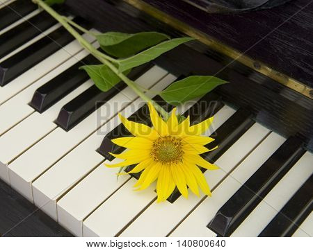 Yellow sunflower on piano - condolence card
