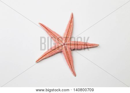 Red starfish or sea star on white background, top view