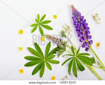 Flowers of a lupine and buttercup on white the top view. The lilac lupine and a yellow buttercup with green leaves lie on white. The top view copyspace in the left top corner