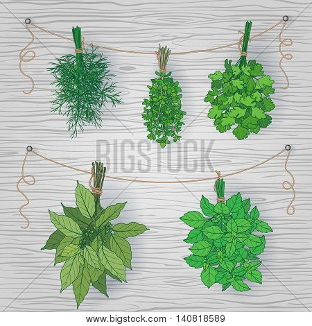 Bundles of thyme bay leaves dill parsley and basil tied with a string. Bunches of flavoring green herbs hanging on grey wooden background.