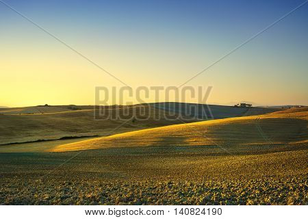 Tuscany spring rolling hills on sunset. Rural landscape. Green fields lonely olive tree and farmlands. Volterra Italy Europe