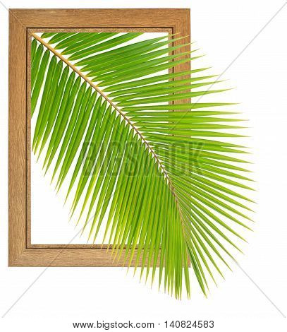 Fresh coconut leaf within wooden frame isolated