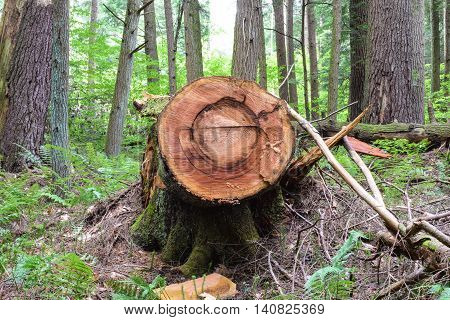 Logging in the Allegheny National Forest in Pennsylvania.