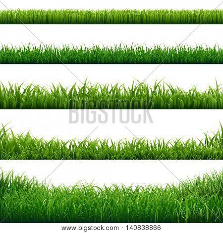 Grass Frame, Vector Illustration