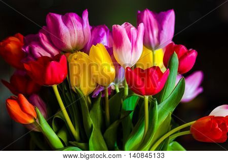 The tulip is a Eurasian and North African genus of perennial bulbous plants in the lily family. It is a herbaceous herb with showy flowers of which around 75 wild species are currently accepted.
