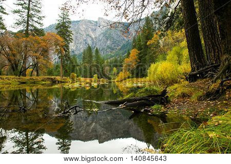 A peaceful river flowing serenly through a forest.