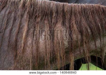 Close up shot of horse mane in the rain