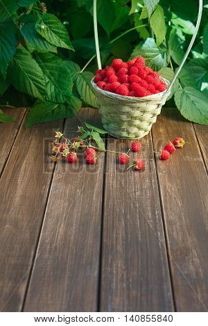 Basket full of raspberries stay on wooden table outdoors at raspberry bush with green leaves background. Summer harvest of berries. Vertical image with copy space at brown wood