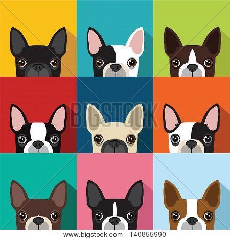 boston terrier pattern design vector full color