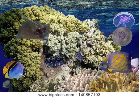 Wonderful and beautiful underwater world with corals and tropical fish Red Sea Egypt.