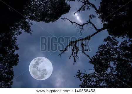 Silhouette of the branches of trees against the night sky in a full moon. Beautiful landscape with bright moon in the night sky. Outdoors. The moon were NOT furnished by NASA.