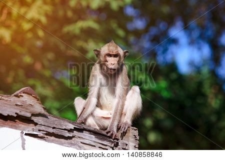 Adorable Monkey Sitting On A Mouldy Wood On Blurred Nature Background.