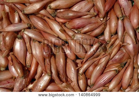 Layer of shallot bulbs in bright sunlight is as natural background.