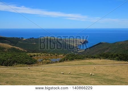 Summer scene on the Banks Peninsula New Zealand. Meadow with grazing sheep and pond. Pacific Ocean.