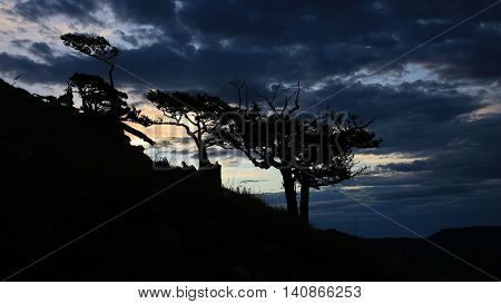 Evening scene in New Zealand. Silhouettes of weathered trees and dark sky.