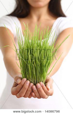 Mujer holding wheatgrass en manos