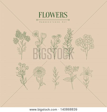 Flower Herbarium Hand Drawn Realistic Detailed Sketch In Classy Simple Pencil Style On White Background