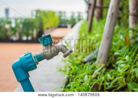 Tap water off the flower in garden.