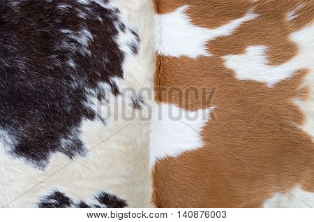 two cowhides: black and white with brown spots