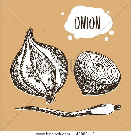 Onion in engraving vintage style. Hand drawn onion on brown craft paper. Vector illustration