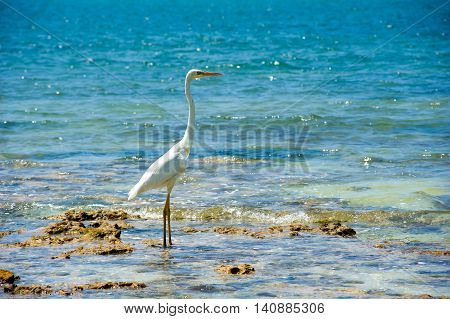 White Egret on the beach of one of the Florida Keys