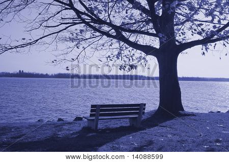 Lonely bench near the lake