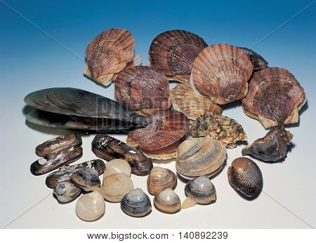 A variety of shellfish