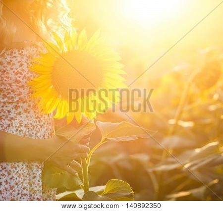 Young woman holding sunflower standing on field. Backlight at sunrise time.