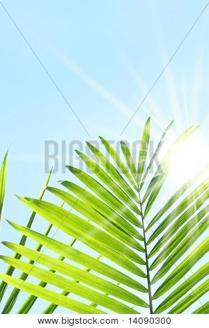 Palm leaves against a blue summer sky