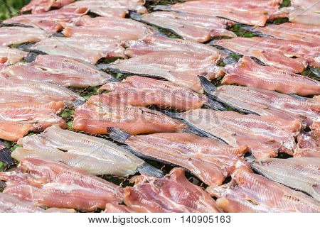 Fish Dried Under The Sun, Striped Snakehead Fish Dried Prepare For Cook In Thailand