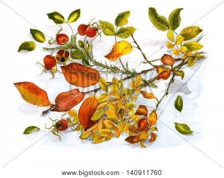 Watercolor bunch of gold and red leaves, rosehip berries and twigs