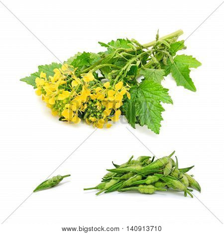 Isolated sprig of fresh rapeseed and heap of fresh rapeseed beans on white background. Design element for product label, catalog print, web use.