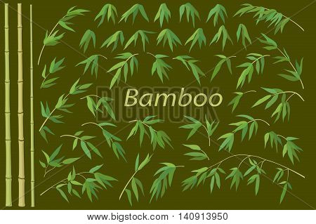 Exotic Background, Tropical Bamboo Plants Trunks, Stems, Branches and Green Leaves. Vector