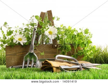 Fresh herbs in wooden box with garden tools on grass