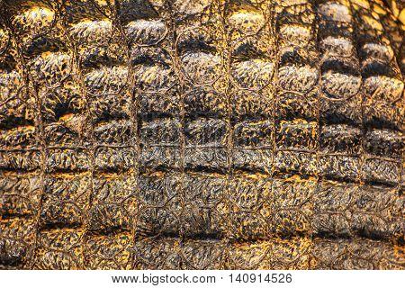 Crocodile skin texture. close up crocodile skin