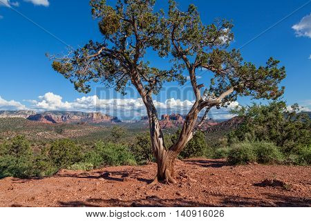 the scenic red rock landscape of sedona arizona