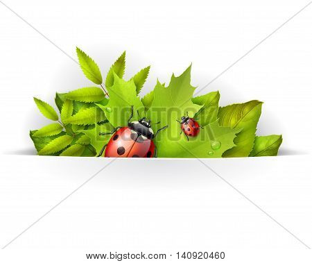 Banner spring background or card template with green maple leaves and ladybird vector background