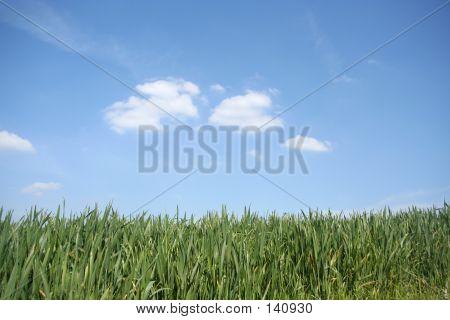 Grass Meets Sky