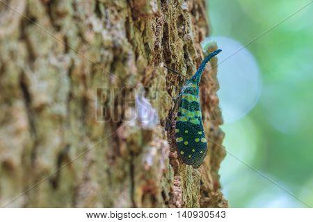 Close Up Lanternflies On Tree