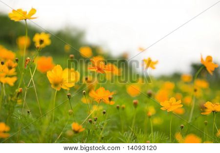 flower (Forest of Flowers )