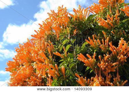orange flowers with sky