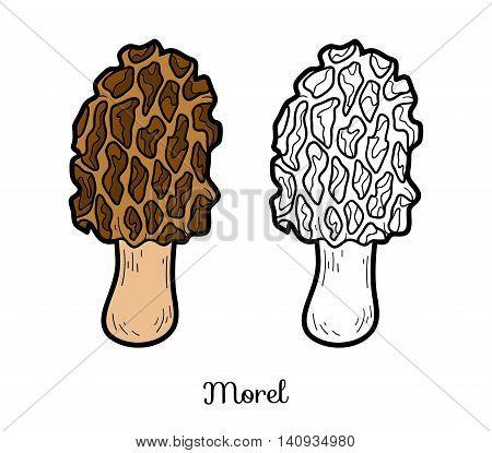 Coloring Book. Edible Mushrooms, Morel