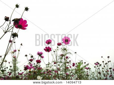 red flowers (Forest of Flowers )
